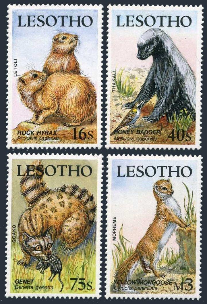 的专栏:獾獾的动物世界